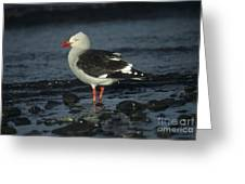 Dolphin Gull Greeting Card