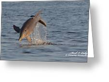 Dolphin I Mlo Greeting Card
