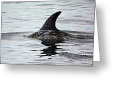 Dolphin In Monterey Greeting Card