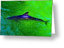 Dolphin In The Shallows Greeting Card