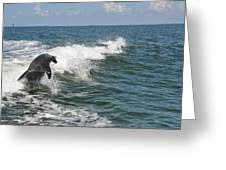 Dolphin In Waves Greeting Card