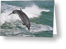 Dolphin Leap Greeting Card