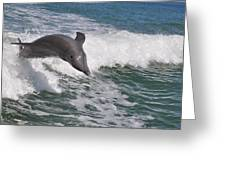 Dolphin Riding The Waves Greeting Card