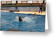 Dolphin Show - National Aquarium In Baltimore Md - 1212102 Greeting Card
