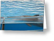 Dolphin Show - National Aquarium In Baltimore Md - 121211 Greeting Card by DC Photographer