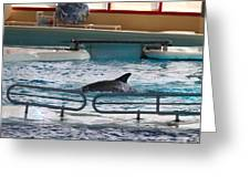 Dolphin Show - National Aquarium In Baltimore Md - 1212115 Greeting Card by DC Photographer