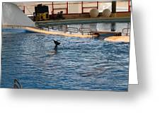 Dolphin Show - National Aquarium In Baltimore Md - 1212142 Greeting Card