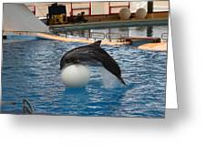 Dolphin Show - National Aquarium In Baltimore Md - 1212160 Greeting Card