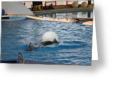 Dolphin Show - National Aquarium In Baltimore Md - 1212164 Greeting Card