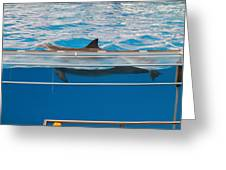 Dolphin Show - National Aquarium In Baltimore Md - 1212173 Greeting Card