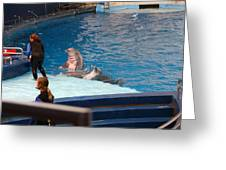 Dolphin Show - National Aquarium In Baltimore Md - 1212174 Greeting Card by DC Photographer