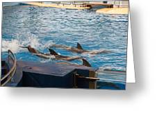 Dolphin Show - National Aquarium In Baltimore Md - 1212187 Greeting Card