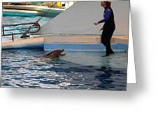 Dolphin Show - National Aquarium In Baltimore Md - 1212195 Greeting Card