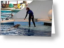 Dolphin Show - National Aquarium In Baltimore Md - 1212196 Greeting Card by DC Photographer