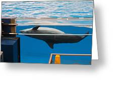 Dolphin Show - National Aquarium In Baltimore Md - 1212198 Greeting Card