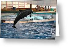 Dolphin Show - National Aquarium In Baltimore Md - 1212212 Greeting Card by DC Photographer
