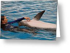 Dolphin Show - National Aquarium In Baltimore Md - 1212231 Greeting Card by DC Photographer