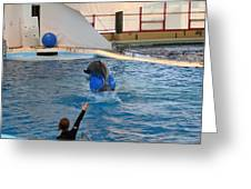 Dolphin Show - National Aquarium In Baltimore Md - 121240 Greeting Card by DC Photographer