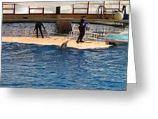 Dolphin Show - National Aquarium In Baltimore Md - 121246 Greeting Card by DC Photographer