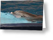 Dolphin Show - National Aquarium In Baltimore Md - 121261 Greeting Card by DC Photographer