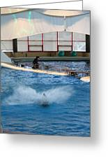 Dolphin Show - National Aquarium In Baltimore Md - 121297 Greeting Card by DC Photographer