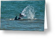 Dolphin Tale Greeting Card