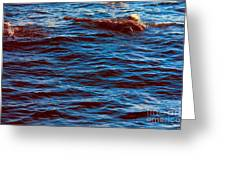 Dolphin Visitors Greeting Card