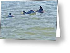 Dolphins 2 Greeting Card