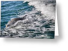Dolphins Smile Greeting Card