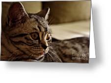 Domestic Cat Greeting Card