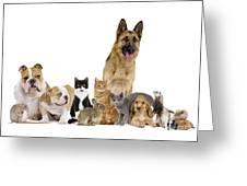 Domestic Mammal Pets Greeting Card