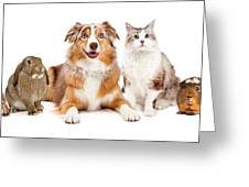 Domestic Pet Composite Greeting Card
