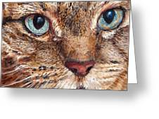 Domestic Tabby Cat Greeting Card