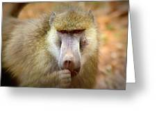 Dominant Male Baboon Greeting Card
