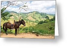 Donkey And Hills Greeting Card