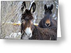 Donkey And The Mule Greeting Card