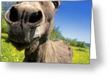 Donkey Greeting Card by Bernard Jaubert