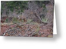 Donkey Deer Feeding Greeting Card