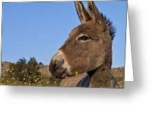 Donkey In Greece Greeting Card
