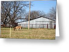 Donkey Lebanon In Oklahoma Greeting Card