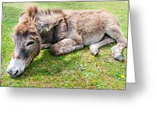 Donkey On Grass Greeting Card