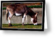 Donkey With Oil Painting Effect Greeting Card