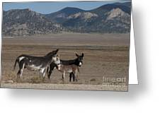 Donkeys In The Colorado Rockies Greeting Card