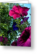 Donna's Blooming Petunias Greeting Card