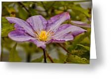 Donna's Purple Flower Greeting Card