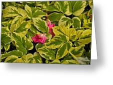 Donna's Rose Petals Greeting Card