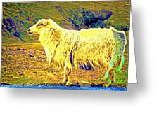 Dont Be Sheep, You Said, But I Just Can't Help It Greeting Card