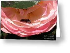 Don't Bug Me Greeting Card