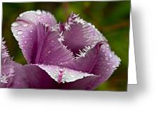 Dont Call Me A Monster Just Because I Have Teeth Purple Tulip Greeting Card