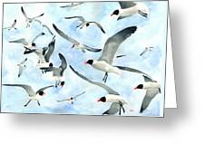 Don't Feed The Seagulls Greeting Card